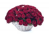 101 красная роза (0)