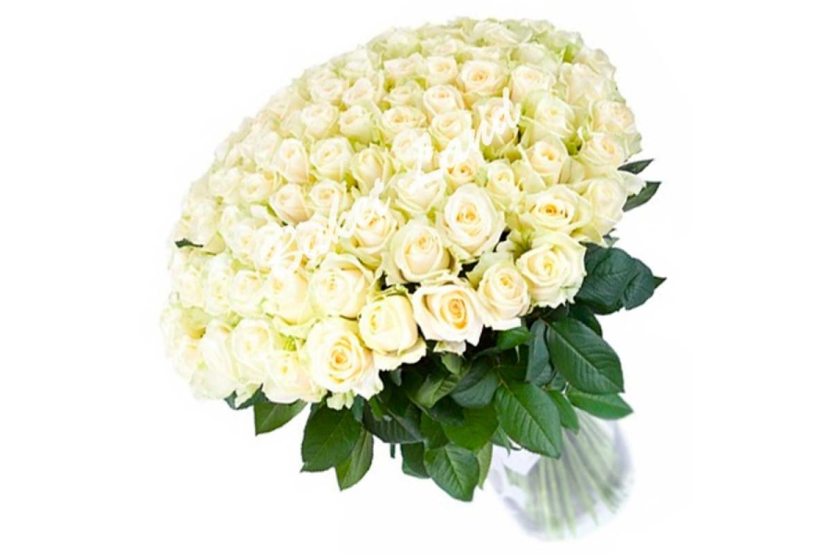 Поздравления, белые розы открытка с др