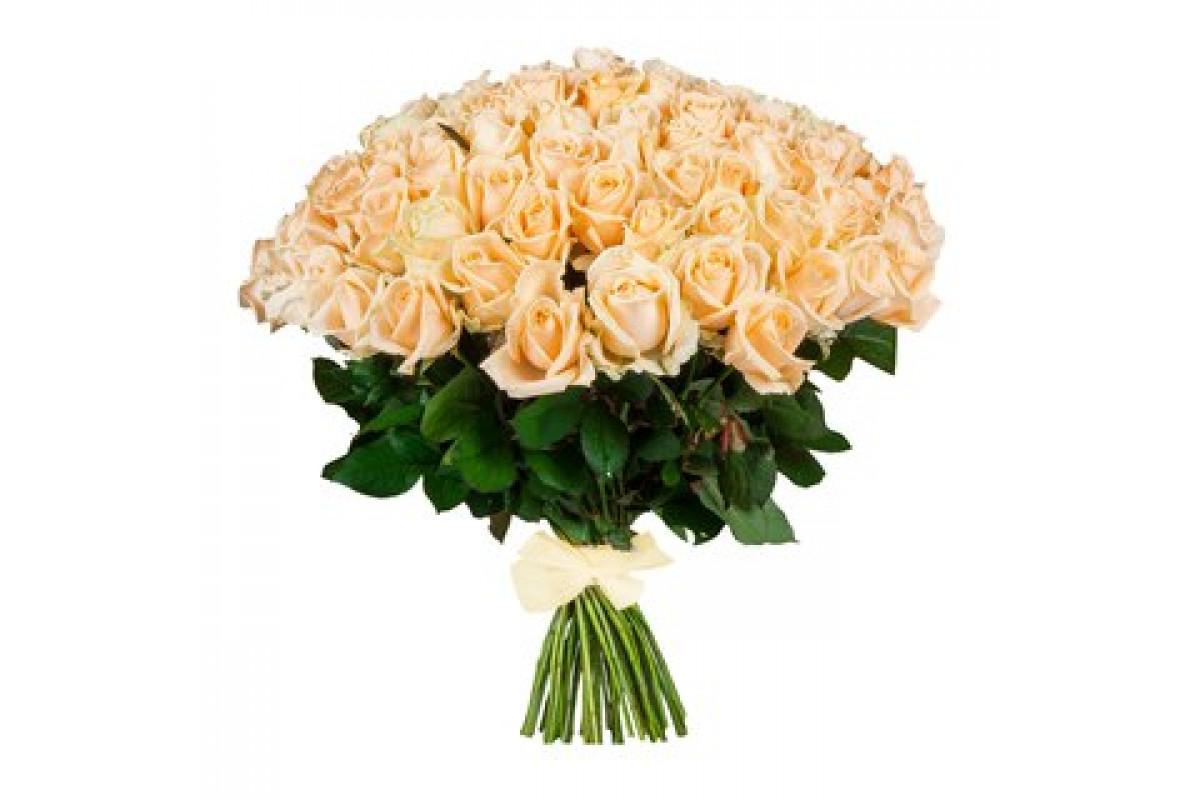 База, купить цветы кремовые розы минск