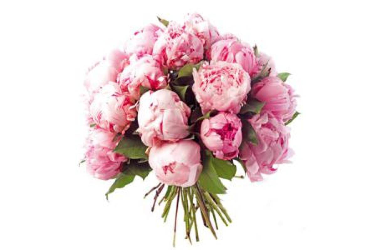 Днем рождения, картинки букеты пионовых роз на белом фоне