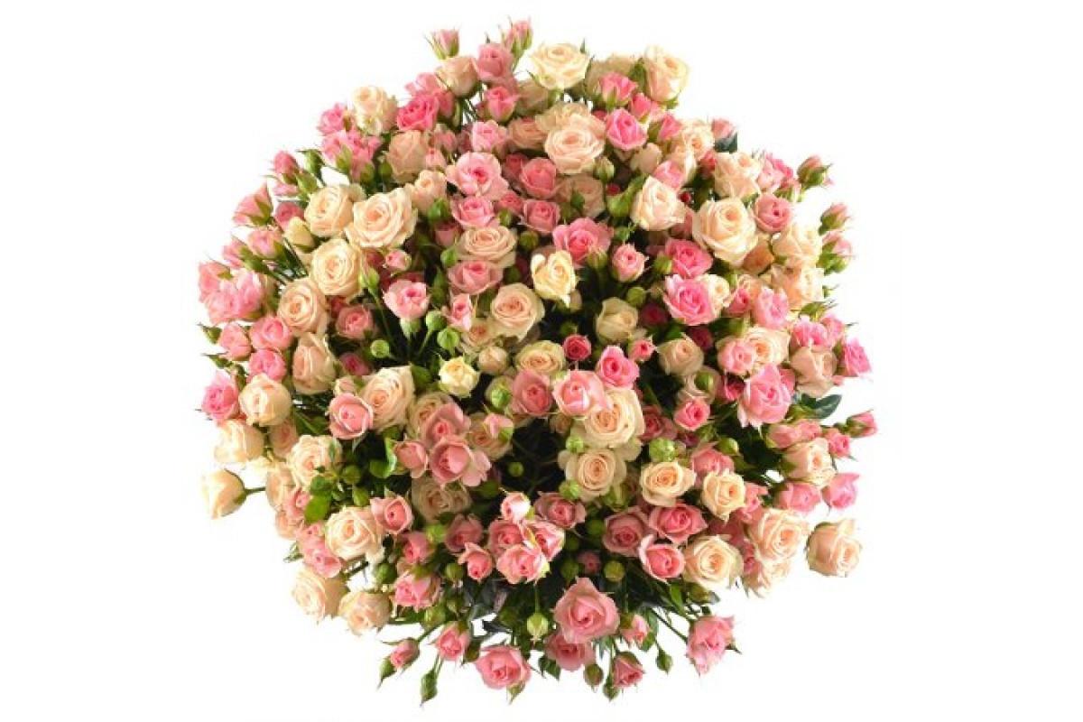 Кустовые розы открытки, работа картинки