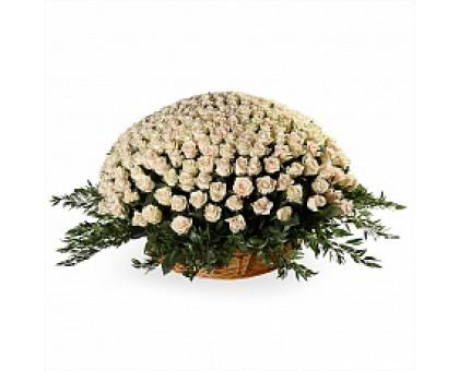 1001 кремовая роз в корзине. Корзина кремовых роз 50 см. (Эквадор)