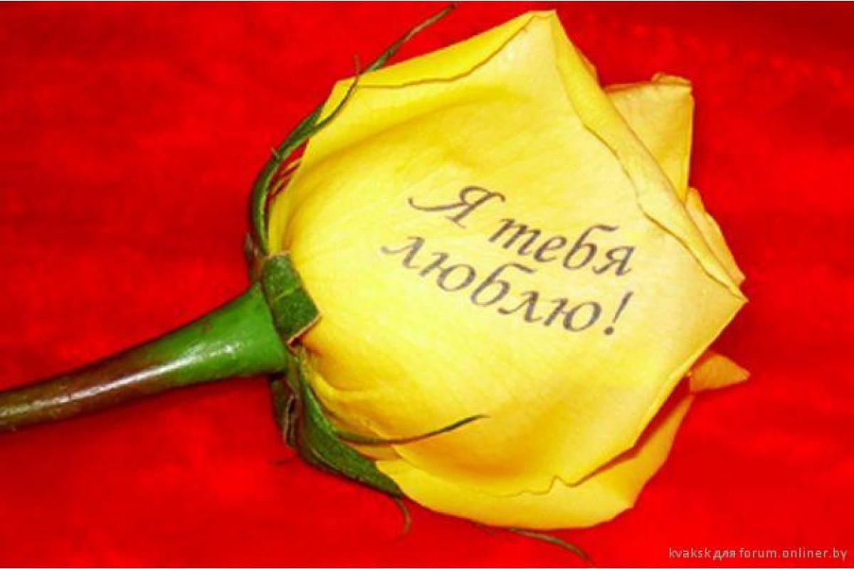 Открытки день, картинка розы с надписью я люблю тебя