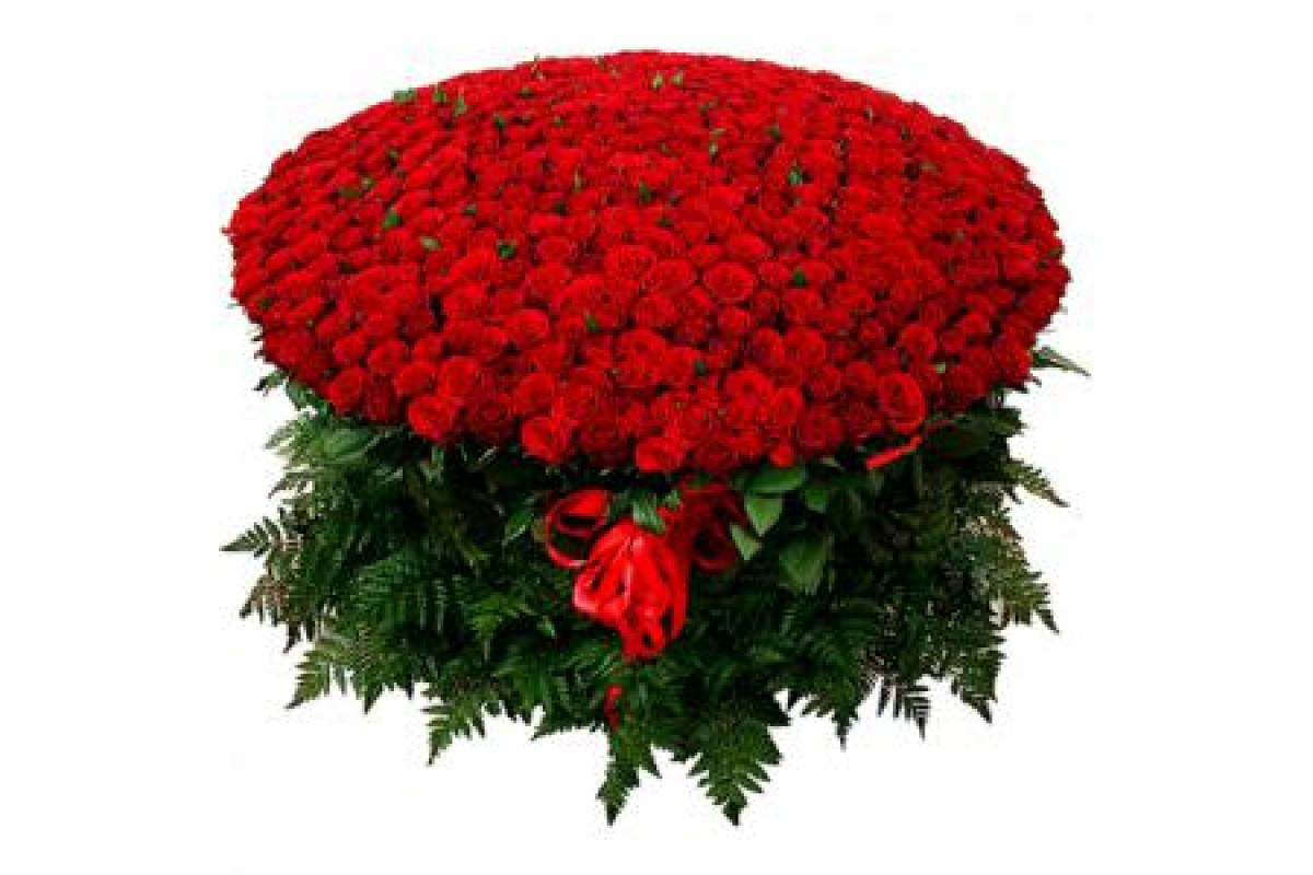 будут живые розы картинки букеты 1001 роза лучших арбалетов купить