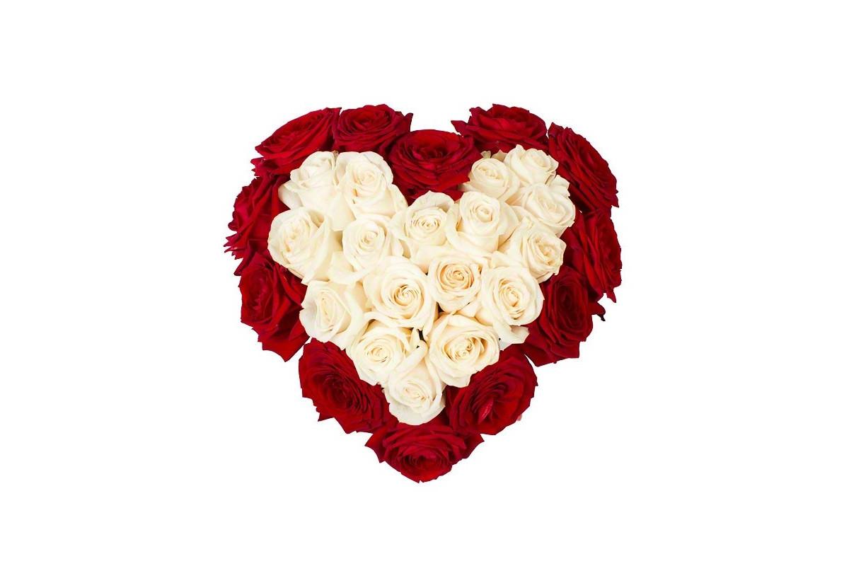 сердце из белых роз фото окраине расположена новая
