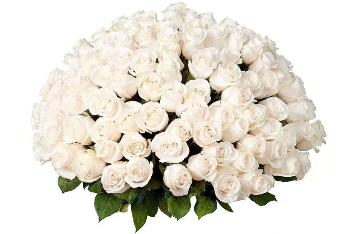 Красивые открытки с букетом белых роз