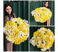 Bouquet of 31 chrysanthemums mix!
